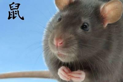 Китайский гороскоп - совместимость Крысы, Любовь, брак и симпатии Крысы